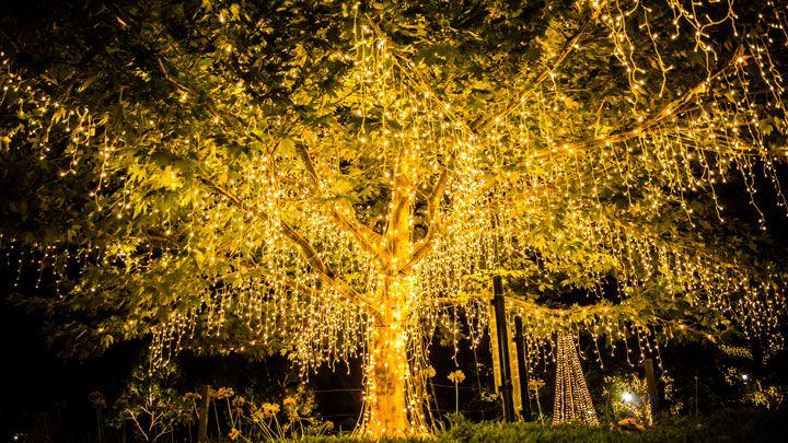 arbre décoré avec lumières